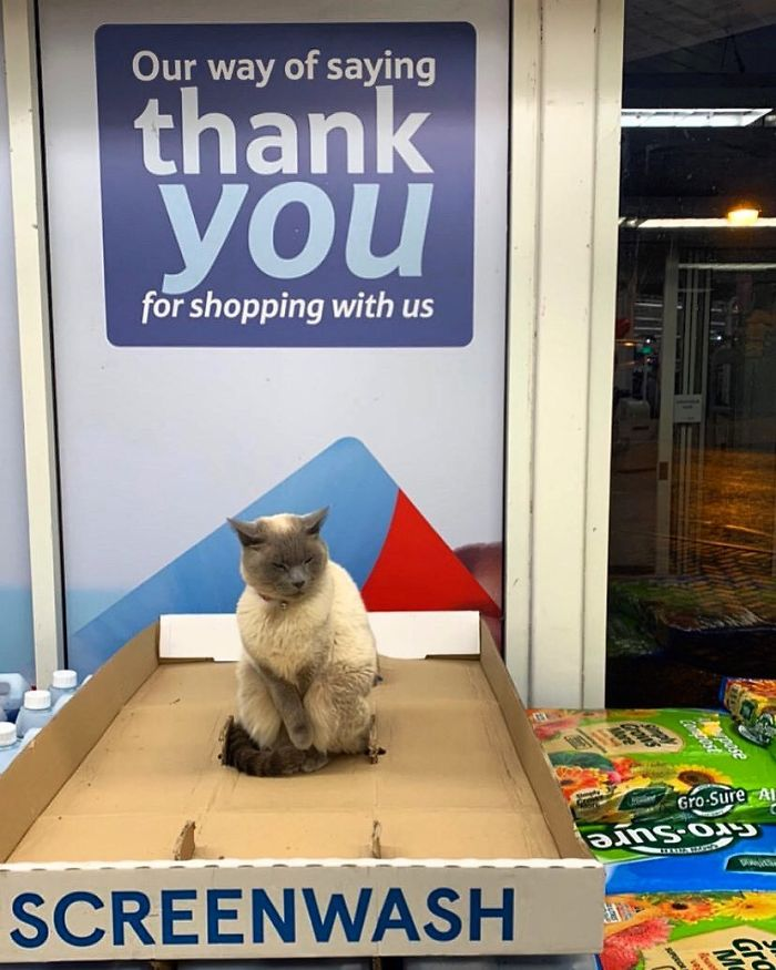 cats in shops thank you sign