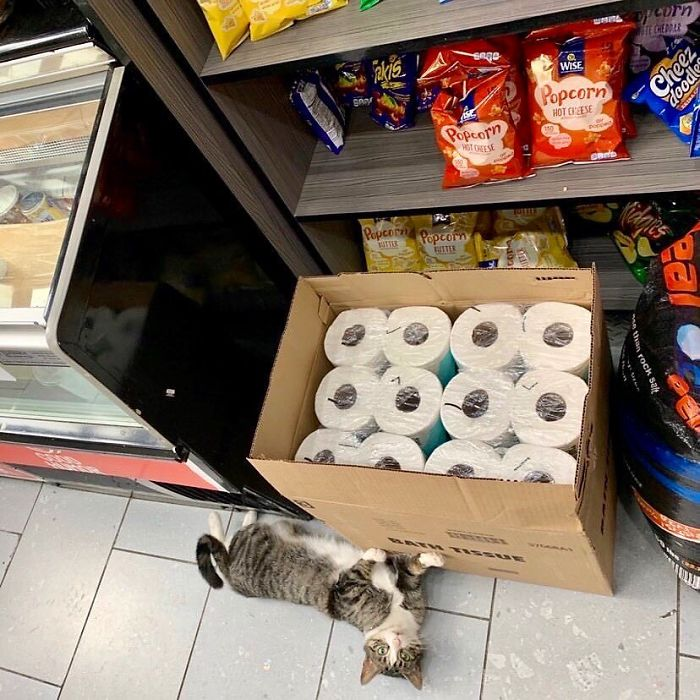 cats in shops tissue papers