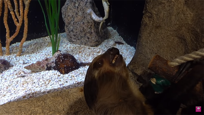 chico the sloth sees seahorses