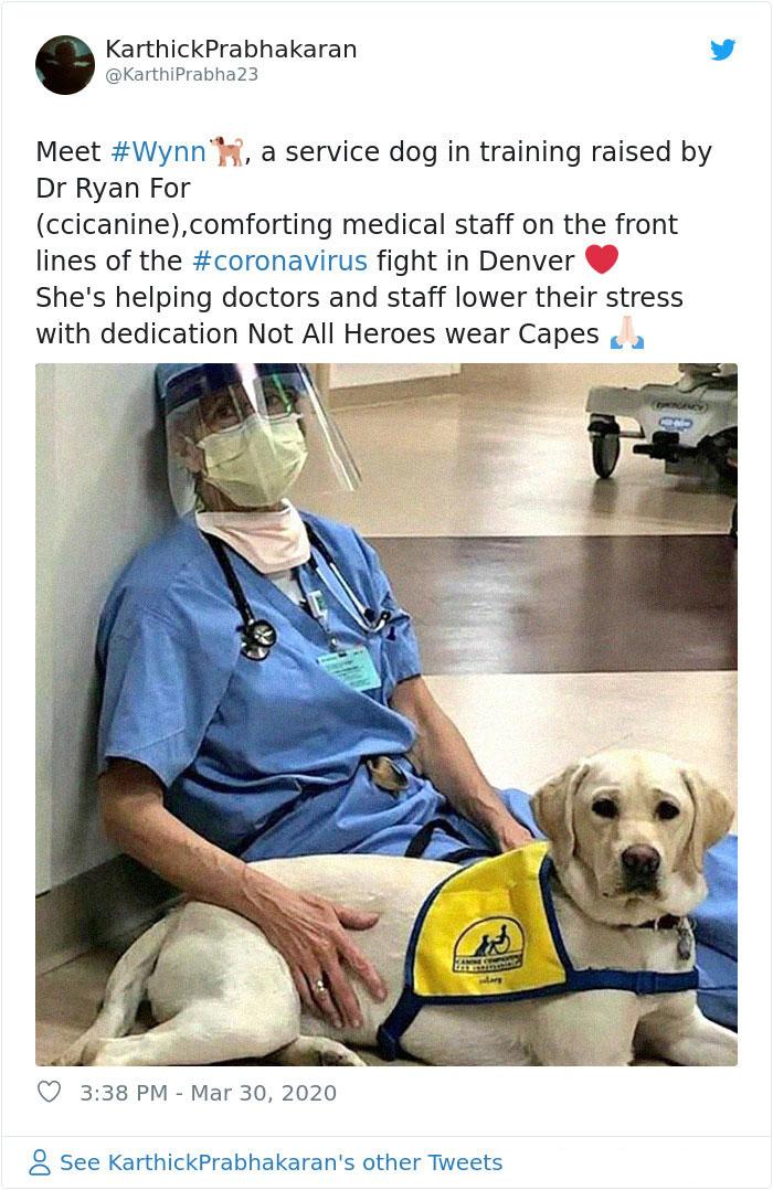 coronavirus good stories therapy dog