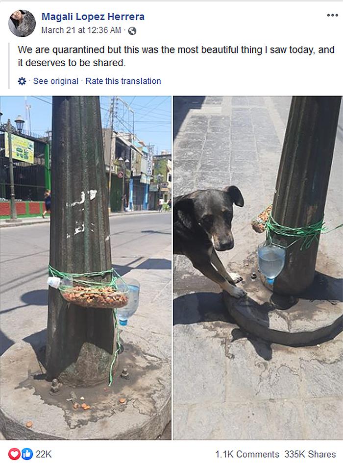 coronavirus wholesome stories free dog food