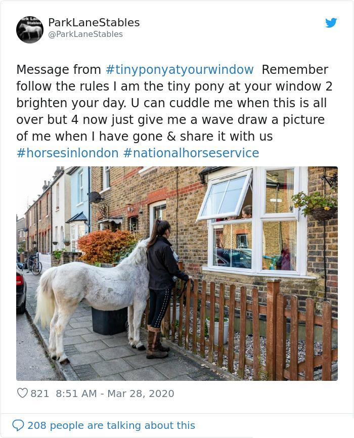 coronavirus wholesome stories tiny pony pays visit