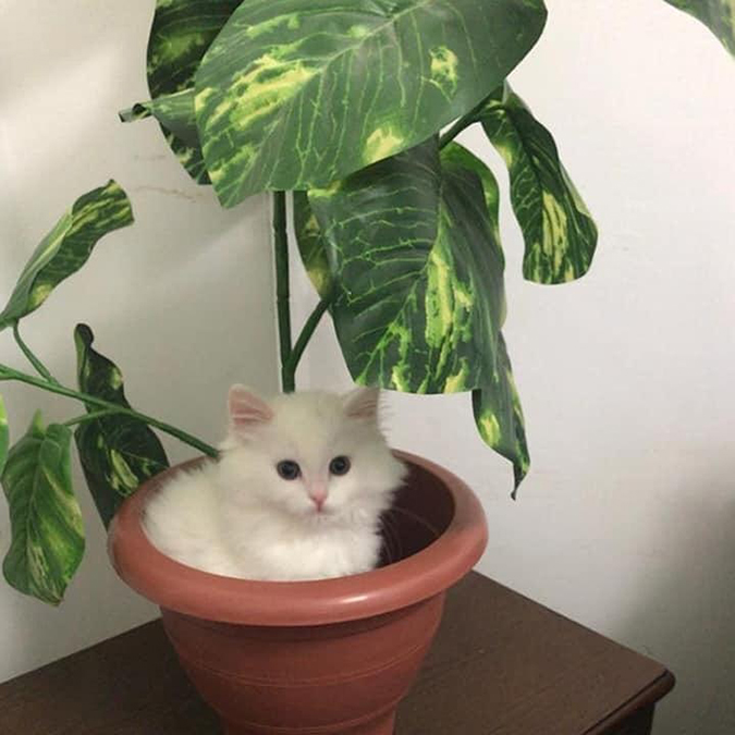 cotton the kitten sits on potted plant rescue pet photos