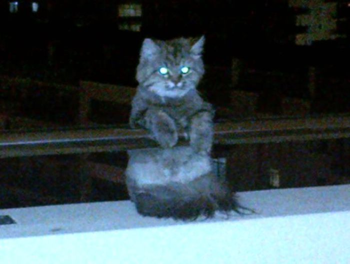 creepy kitten on 7th floor balcony