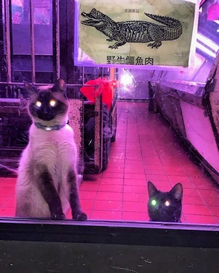 creepy kitties with glowing eyes
