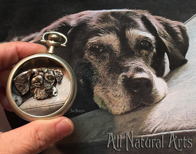 custom pet portrait by sue beatrice