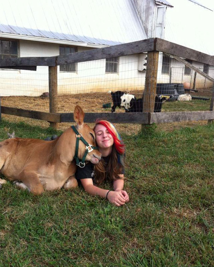 cute cattle pet with girl