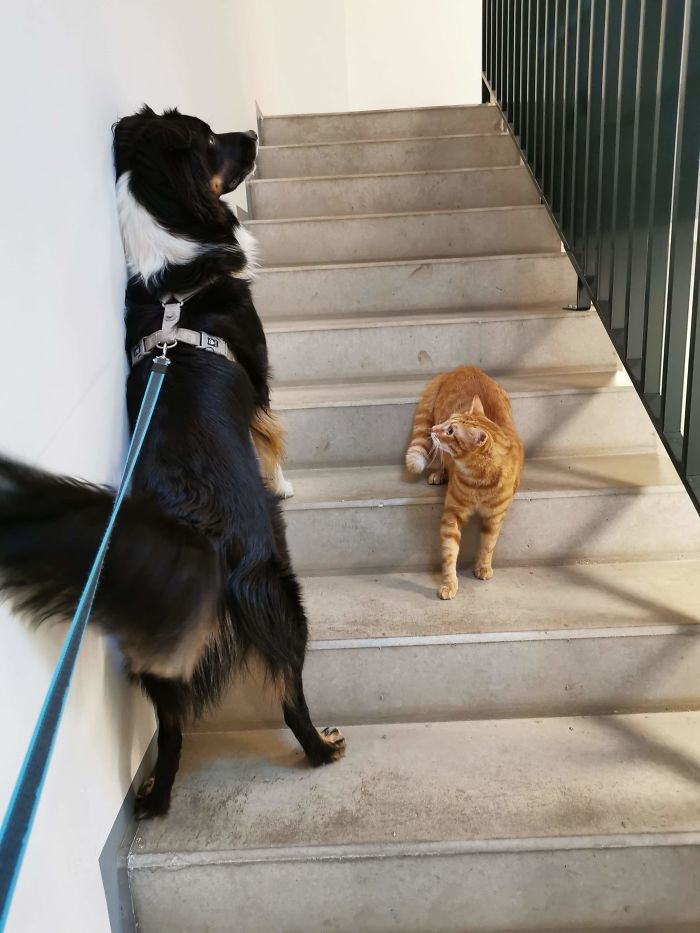 dog avoids close contact with cat