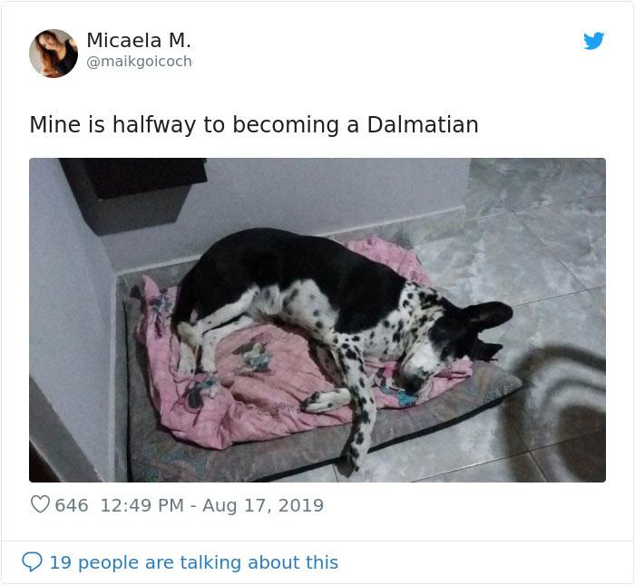 dog becoming half dalmatian