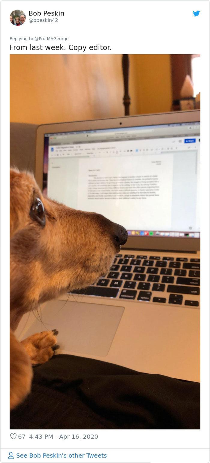 dog copy editor