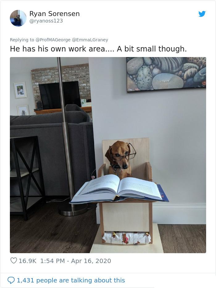 dog doing classwork