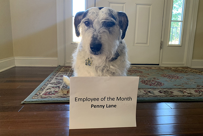 dog employee of the month
