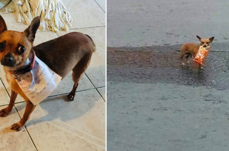 dog getting Cheetos