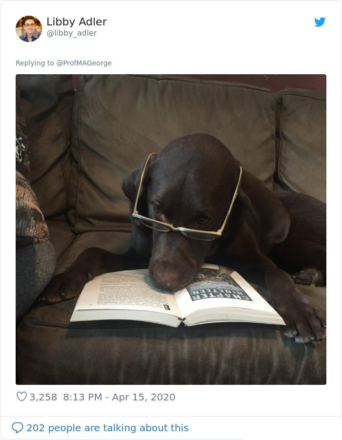 dog in eyeglasses study buddy