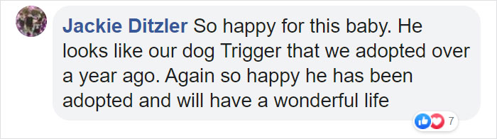 dog loves holding hands comment jackie
