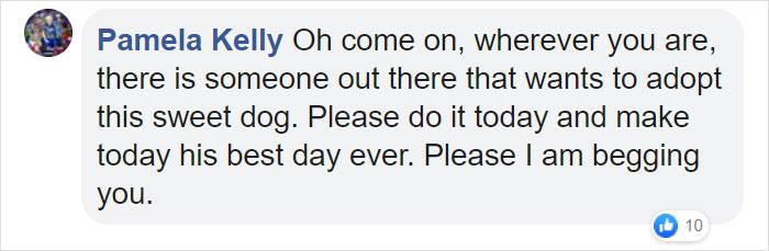 dog loves holding hands comment pamela