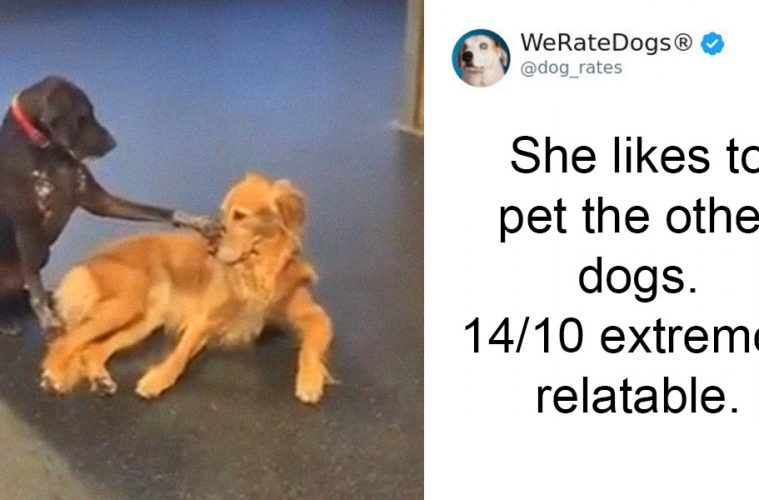 dog petting other dogs
