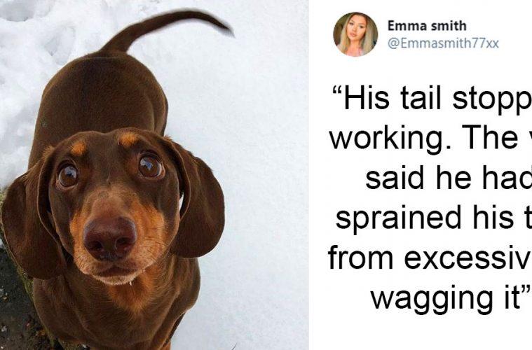 dog sprained tail