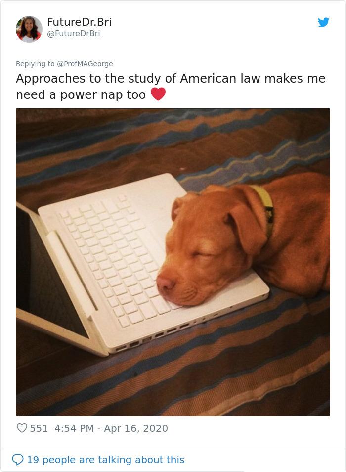 dog study buddy sleeping on laptop