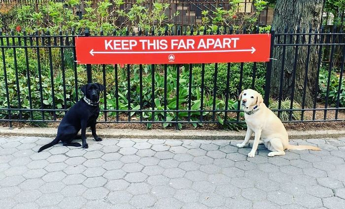 dogs keep space apart