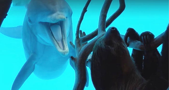 dolphins meet sloth