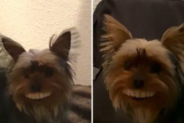 fake teeth