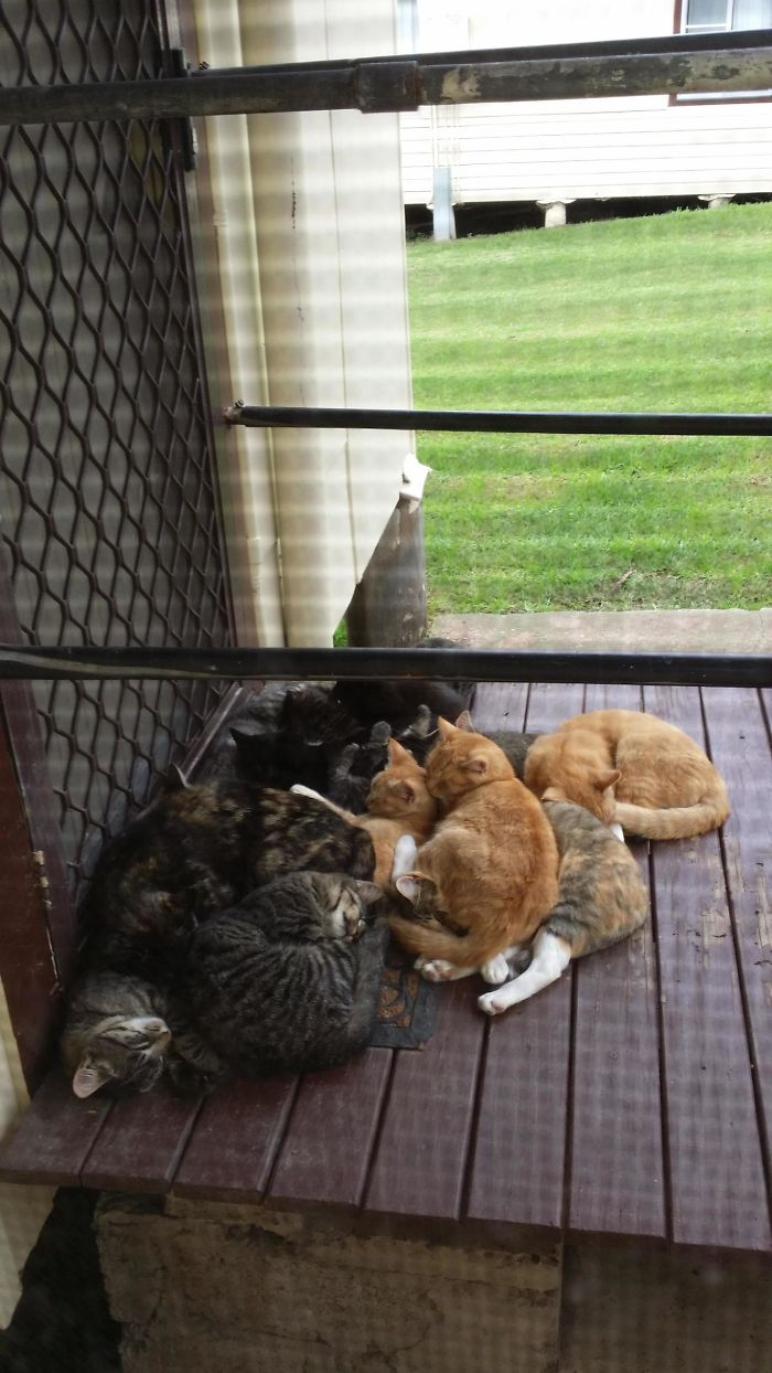 family of stray kitties sleeping on porch