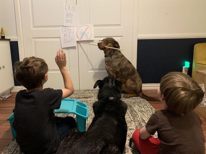 funny kids lockdown stories dog teacher