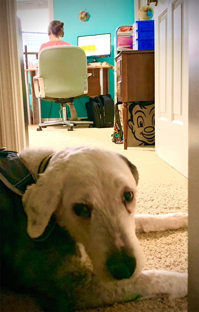 gatekeeper dog