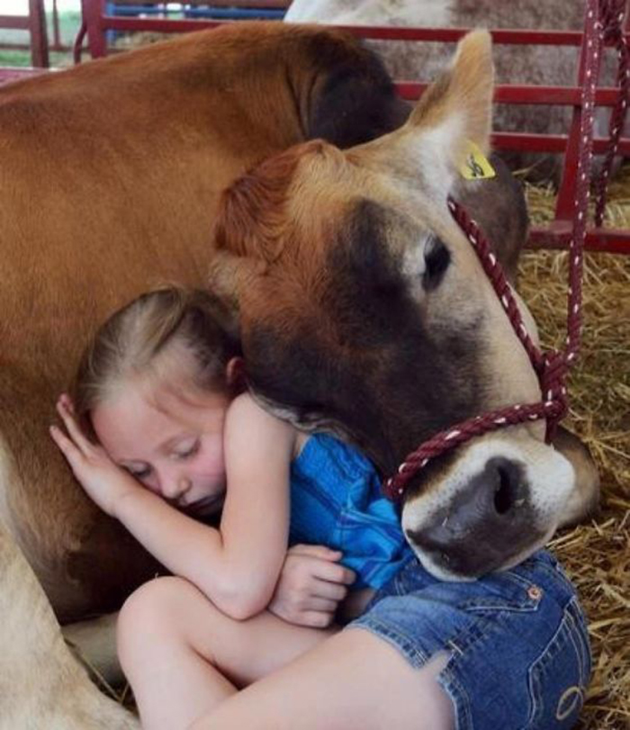 girl sleeping with cattle pet