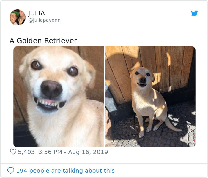 golden retriever turned out different breed