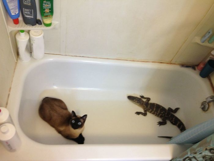 i don't own a cat photos bathtub