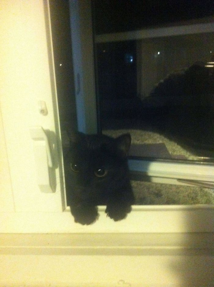 i don't own a cat photos black kitten window