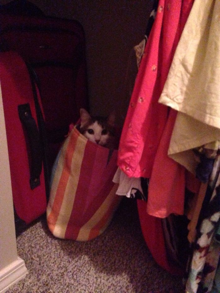 kitten hiding in the bag