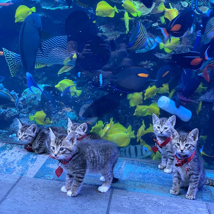 kittens and puppies explore giant aquarium