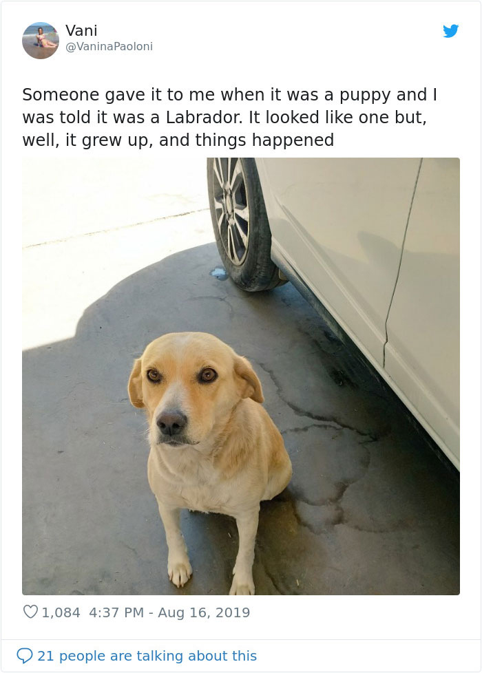 labrador turned out different breed