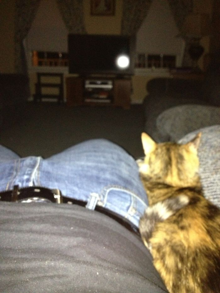 lap kitty