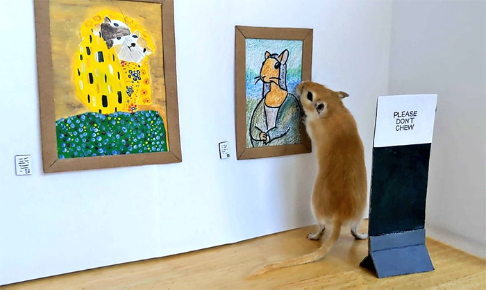 miniature art gallery for gerbils