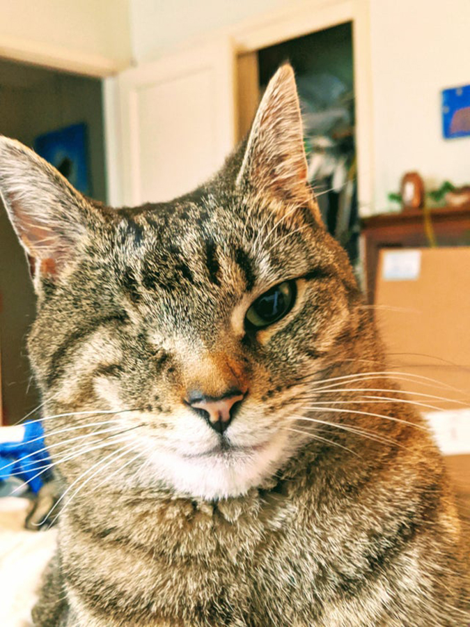 one eyed cat rescue pet