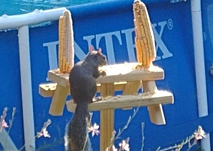picnic table squirrel feeder cedar large