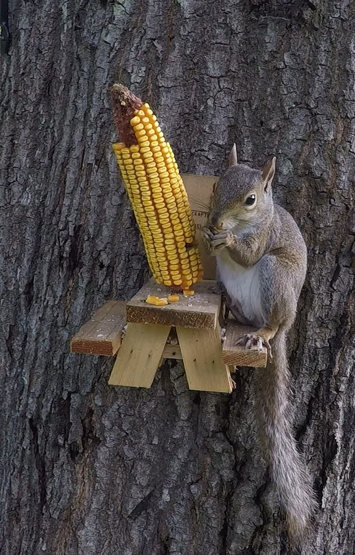 picnic table squirrel feeder cob holder