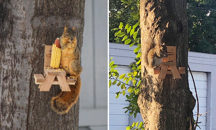 picnic table squirrel feeder in action