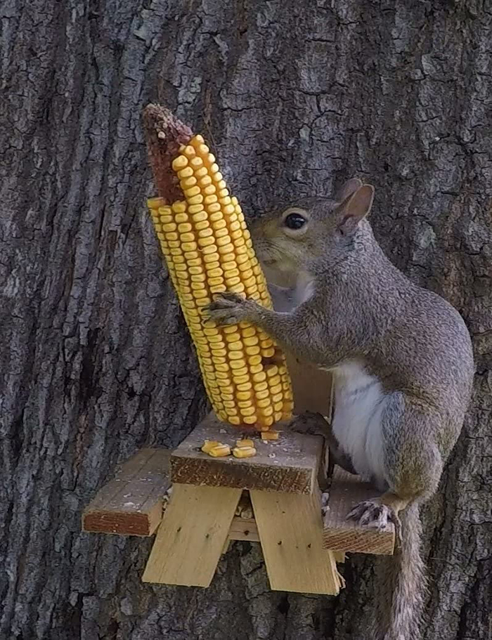 picnic table squirrel feeder small