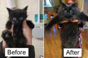 rescue kittens before and after