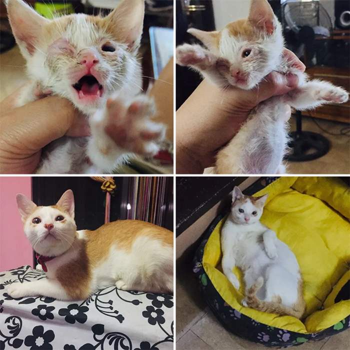 rescue kittens one year after adoption transformation
