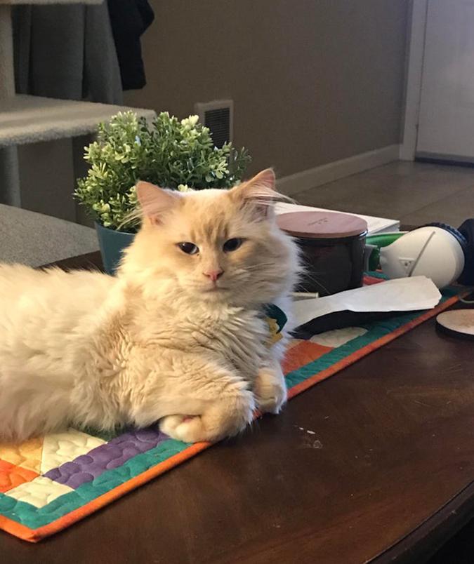 rescue pet photo of a majestic cat