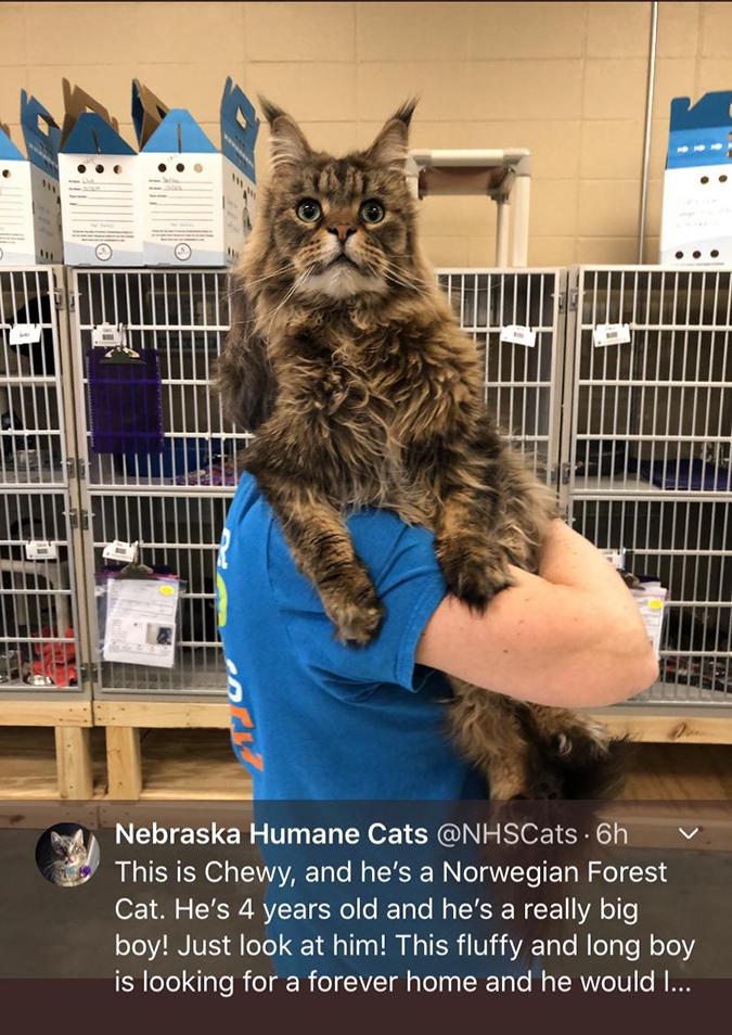 rescue pet photos-absolute unit of a cat