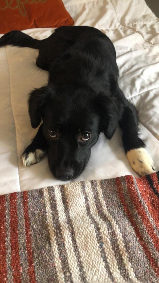 rescue pet photos-adoring black pup