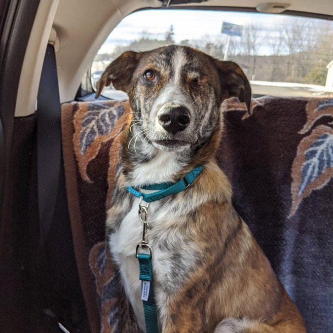 rescue pet photos handsome one-eyed dog