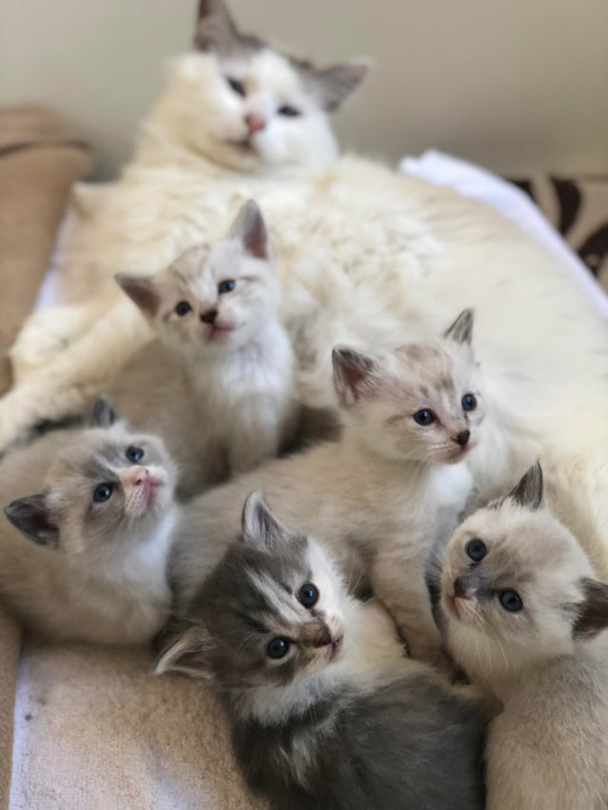 rescue pet photos-mother cat and kittens